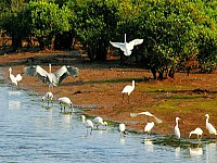GRAND BIRDING TOUR IN VIETNAM (27 days)